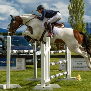 Horse for sale: OUTSTANDING MULTI-DISCIPLINED MARE