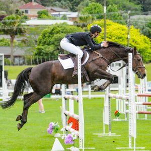 Horse for sale: Perfect Amateur Series Jumper and Allrounder - Price Drop