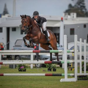 Horse for sale: ULTIMATE JUNIOR RIDER SCHOOLMASTER