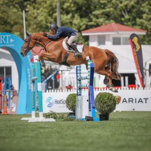 Horse for sale: Fantastic Opportunity - TOP YR/PRO-AM MOUNT