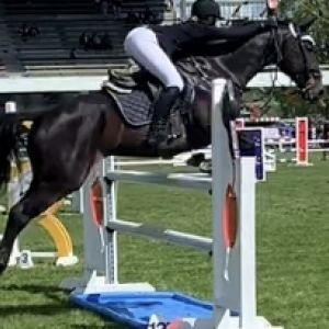 Horse for sale: Stunning Allrounder