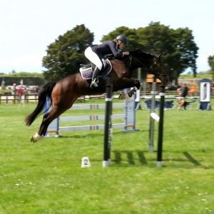 Horse for sale: Windermere Centorini