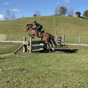 Horse for sale: CONFIDENCE BUILDER