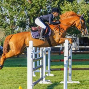 Horse for sale: Talented Show Jumper