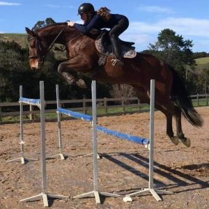 Horse for sale: Exciting prospect