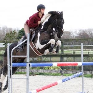 Horse for sale: Potential Junior Rider Prospect