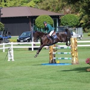Horse for sale: ** Total All rounder**  junior/pro am/1*eventor/Full wire hunter/GP potential.