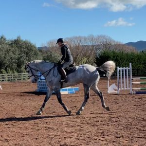 Horse for sale: Quality All Rounder - Fresco