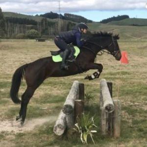Horse for sale: EASY, STRAIGHTFORWARD & FUN