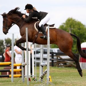 Horse for sale: Easy and Honest Allrounder