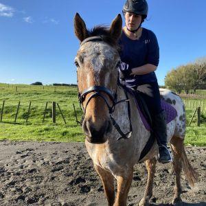 Horse for sale: 16.1 Knabstrupperx TB - Skyhigh INXS (Speed)
