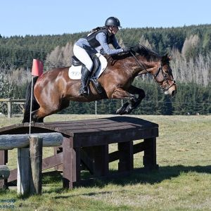 Horse for sale:  super lovely competitive mare