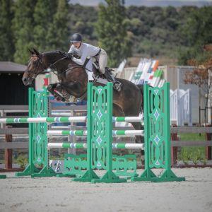 Horse for sale: Experienced Junior Rider, Pro Am Showjumper