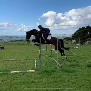 Horse for sale: Superstar Show Jumper/Allrounder!!