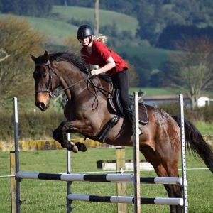 Horse for sale: Great All Rounder