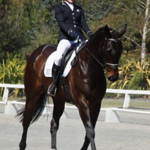 Horse for sale: Handsome and talented all in one