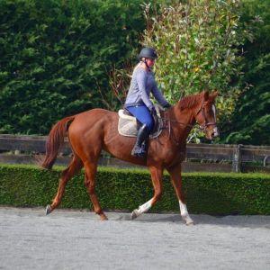 Horse for sale: 5yo Battle Paint 16.2hh Gelding