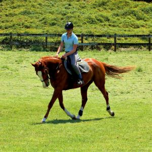 Horse for sale: Beautiful Mover & Fantastic All-Rounder!