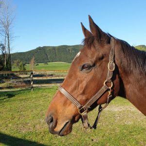 Horse for sale: Lovely OTT - Allrounder Event/Jump/Dressage