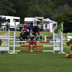 Horse for sale: First hack/Junior rider mount