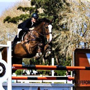 Horse for sale: Quality Junior rider/ amateur rider horse