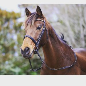 Horse for sale: Gorgeous gelding - looking for next best friend