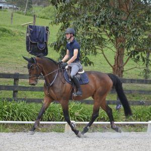 Horse for sale: Alvaro - Genuine, Scopey, Athletic