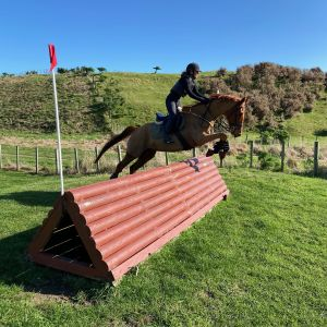 Horse for sale: Experienced Eventer