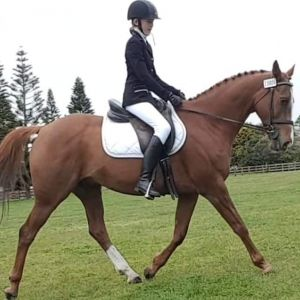 Horse for sale: All-round Gelding.