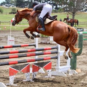 Horse for sale: Waitangi Firefox