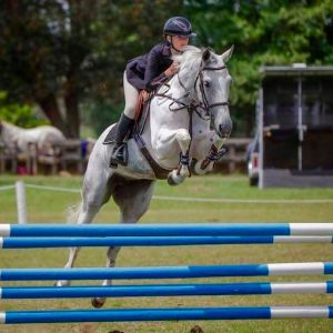 Horse for sale: Tallented Scopey Mare