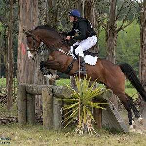 Horse for sale: 2* Eventer