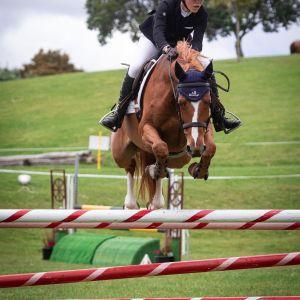 Horse for sale: Scopey Junior/Amateur Mount
