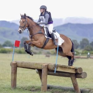 Horse for sale: Outstanding Eventer