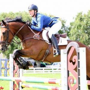 Horse for sale: Stunning Stationbred Gelding