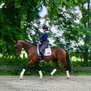 Horse for sale: Quality 6yrs Mare Lingh II x De Niro/Flemmingh