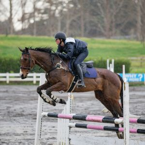 Horse for sale: Super all rounder / first hack