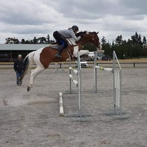Horse for sale: Up & Coming Junior Rider Horse