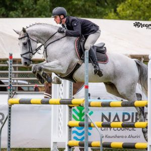 Horse for sale: Perfect Junior/ Amateur/ First Hack