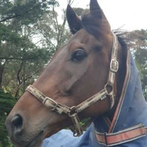 Horse for sale: Future star
