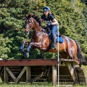 Horse for sale: Amazing All Rounder