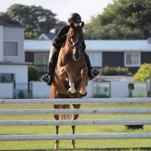 Horse for sale: Ziggy - Your Next Best Friend