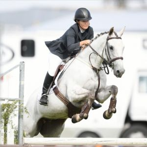 Horse for sale: Potential Plus