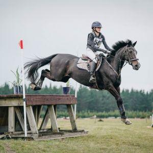 Horse for sale: Superb Allrounder