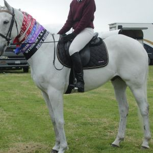 Horse for sale: Ultimate School Master