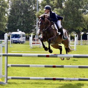 Horse for sale: Tomdooly AKA Tom