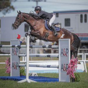 Horse for sale: Competitive YR/JR/ProAm/1.40m jumper