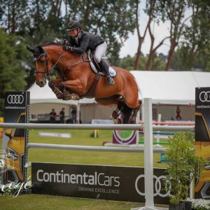 HIGHLY COMPETITIVE AND EXPERIENCED SHOW JUMPER