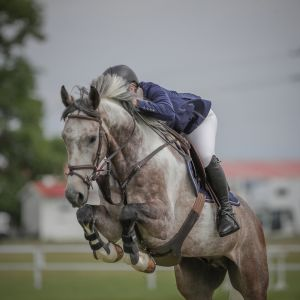 Horse for sale: ABSOLUTE DREAM HORSE