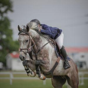 ABSOLUTE DREAM HORSE